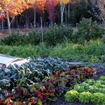 autumnvegetablegarden-motherearthnews